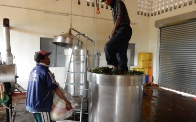 Distillerie d'huile essentielle